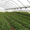 Inovação e capital social: contributos para o desenvolvimento agrícola e rural