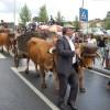 Festa das Colheitas trouxe milhares a Castro Daire