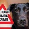 Suspeito de matar um cão a tiro foi detido