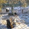 O Cantinho dos Animais Abandonados de Viseu recebe apoio da Autarquia