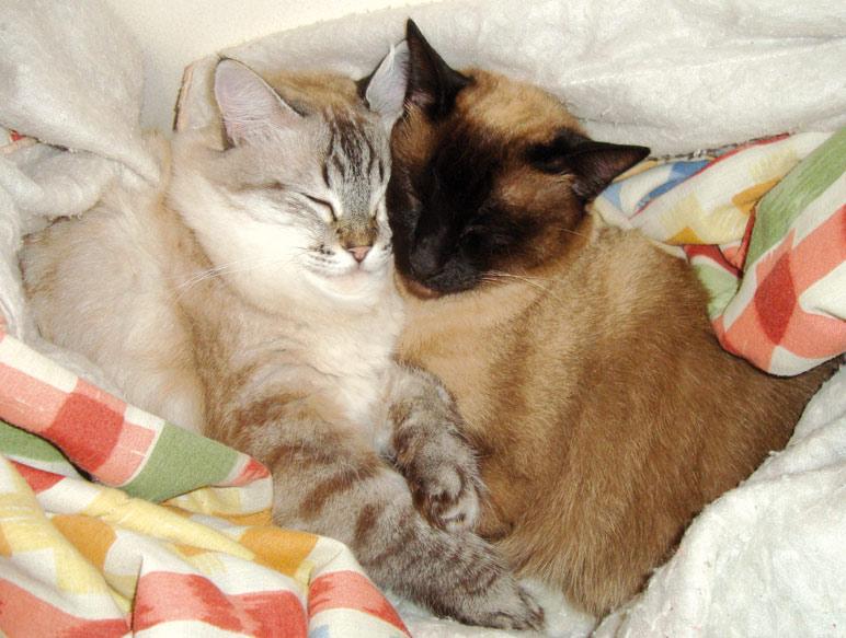 Ed679_p25_amor-de-gatos